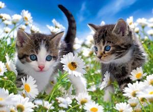 Résultats de recherche d'images pour «spring season cAT»
