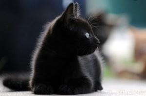 37 Unique Black Cat Names For Your Black Kittens