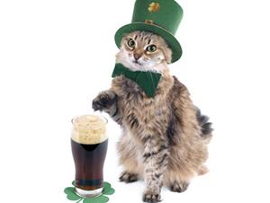 46 Unique Cat Names After Irish Surnames