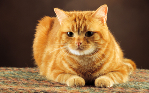 47 Unique Ginger Cat Names From Ginger-colored Kittens
