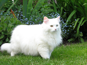 White Cat Names 60 Names For Female Cats With White Haircoats