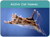Active Cat Names