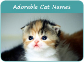 Adorable Cat Names