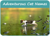 Adventurous Cat Names