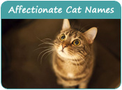 Affectionate Cat Names