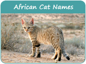 African Cat Names