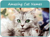 Amazing Cat Names