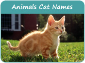 Animals Cat Names