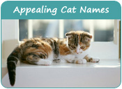 Appealing Cat Names