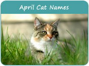 April Cat Names