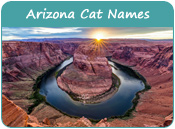 Arizona Cat Names