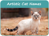 Artistic Cat Names