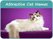 Attractive Cat Names