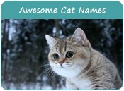 Awesome Cat Names
