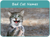 Bad Cat Names