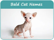 Bald Cat Names