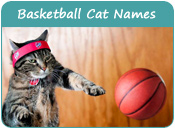 Basketball Cat Names