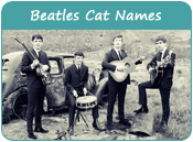 Beatles Cat Names