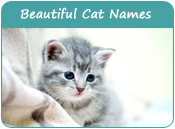 Beautiful Cat Names