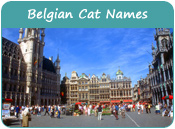 Belgian Cat Names