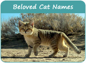 Beloved Cat Names