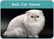 Best Cat Names