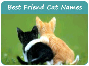 Best Friend Cat Names