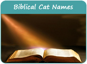 Biblical Cat Names