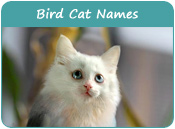 Bird Cat Names