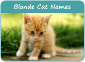 Blonde Cat Names