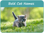 Bold Cat Names