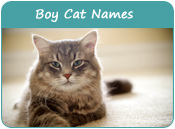 Boy Cat Names