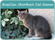 Brazilian Shorthair Cat Names