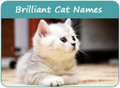 Brilliant Cat Names