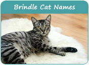 Brindle Cat Names