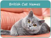 British Cat Names, Unique Cat Names of British Style, Page 1