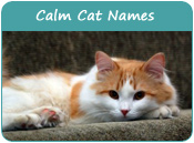 Calm Cat Names