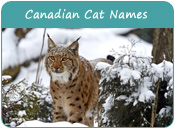 Canadian Cat Names