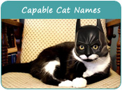 Capable Cat Names