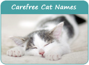 Carefree Cat Names