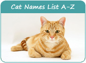 Cat Names List