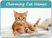 Charming Cat Names