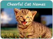 Cheerful Cat Names