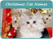 Christmas Cat Names