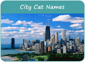 City Cat Names