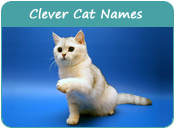 Clever Cat Names