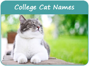 College Cat Names
