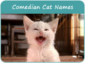 Comedian Cat Names