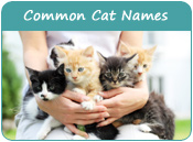 Common Cat Names