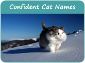 Confident Cat Names